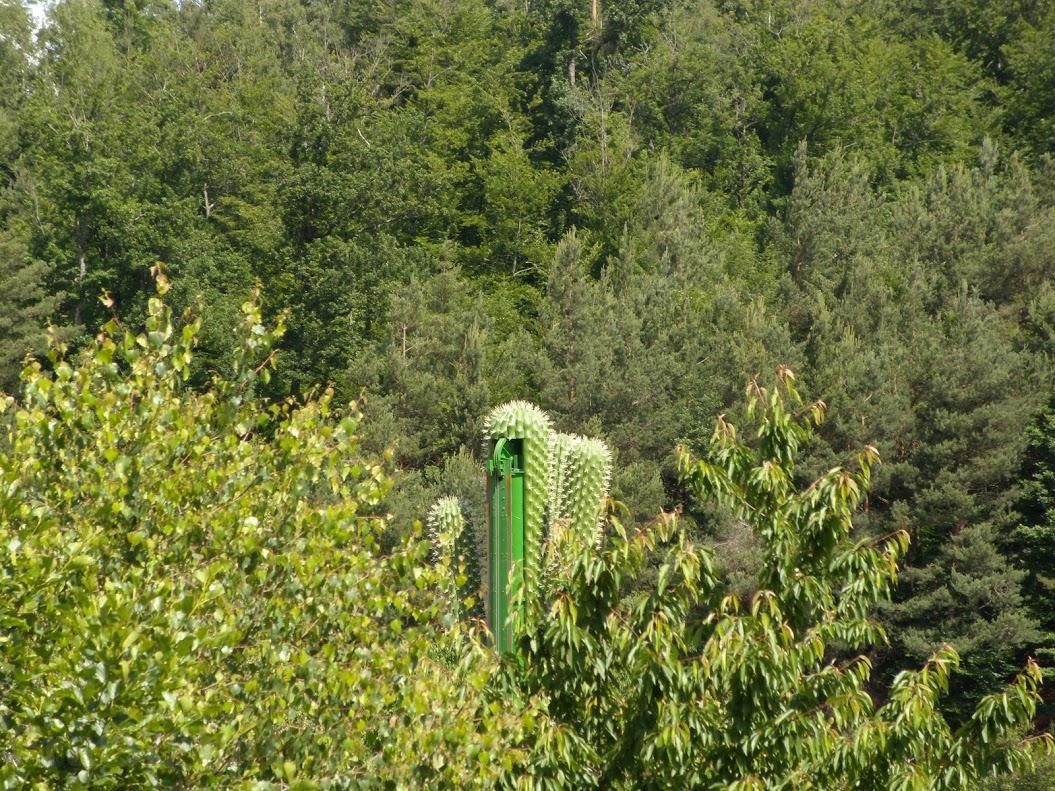 le_cactus_-_attraction_-_295