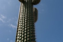 le_cactus_-_attraction_-_288
