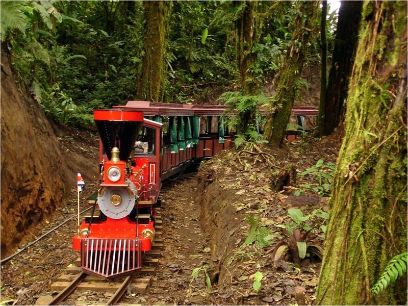 Trainforest-69