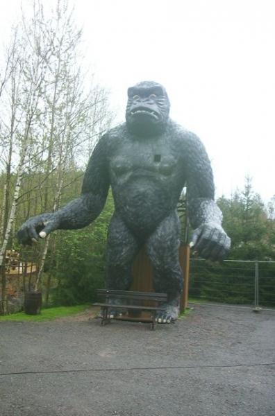 gorille2005